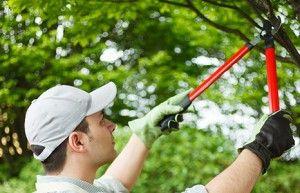 gardening golders green, nw11